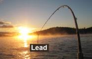 Cum iti cresti afacerea cu lead-uri garantate